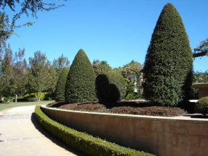 Stump Grinding Indianapolis providing exceptional services to trim and shape hedges and bushes