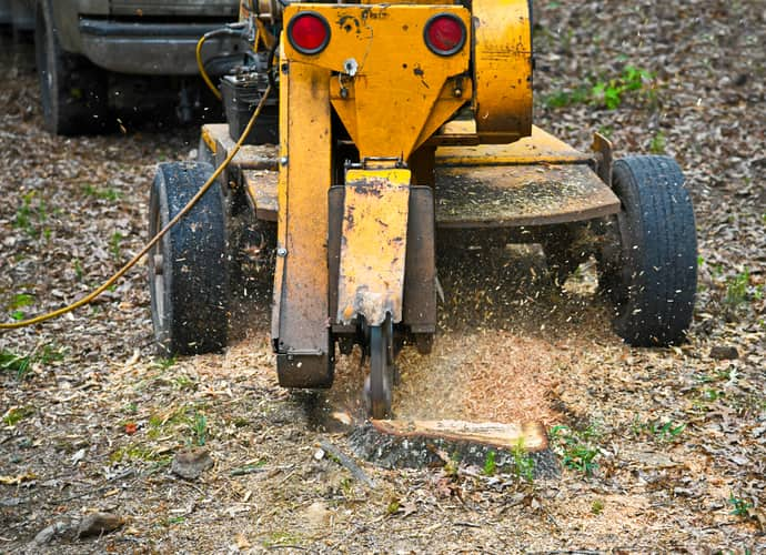 Grinding a stump into mulch