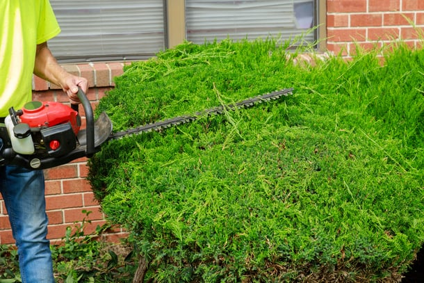 Shaping hedges and bushes in the front yard of an Indianapolis home