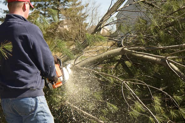 Expert team of arborists performing tree removal services for an Indianapolis resident