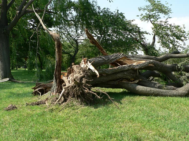Fallen tree presenting a risk to local residents and requiring tree trimming services