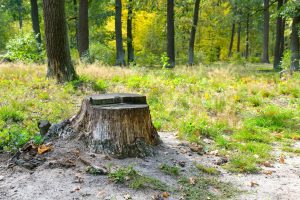 Stump Grinding Indianapolis provides Stump Removal Services