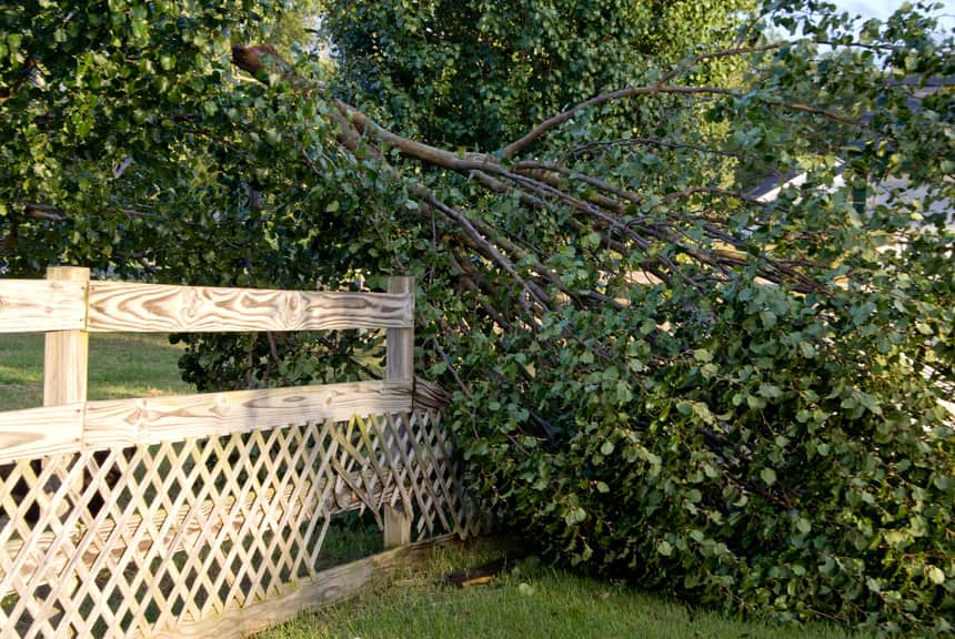 Gate damaged by a fallen tree requiring stump grinding services