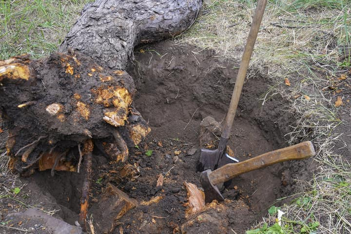 Cutting out a dead tree by removing the tree stump